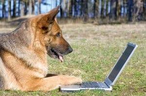 A German Shepherd at a laptop