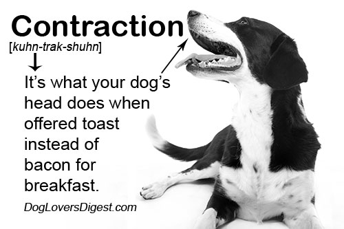 Doggy-Grammar-Contraction