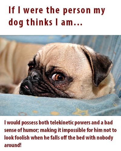 Humor for Dog Lovers by Dog Lover's Digest