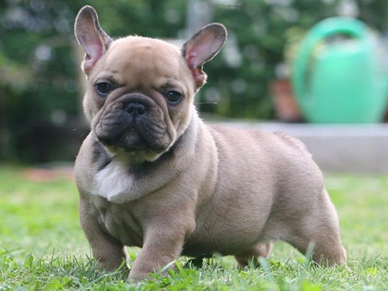 comes to nutrition, you will be glad to hear that brachycephalic dogs ...