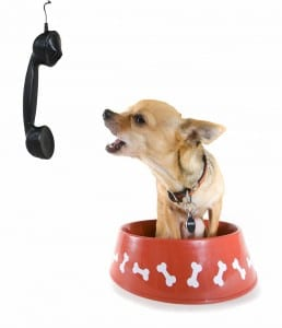 Chihuahua standing in a bowl barking at phone