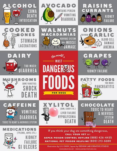 Dangerous Food For Dogs Poster