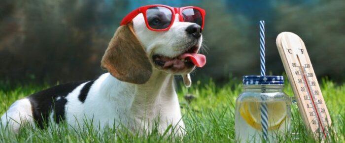 Best Dog Food 2020.The Best Dog Foods 2020