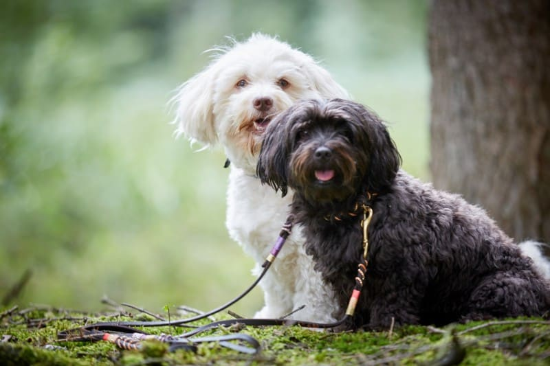 The 12 Best Dog Foods For Havanese
